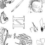Буква И с множеством рисунков