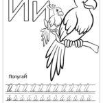 Буква Й пропись с попугаями