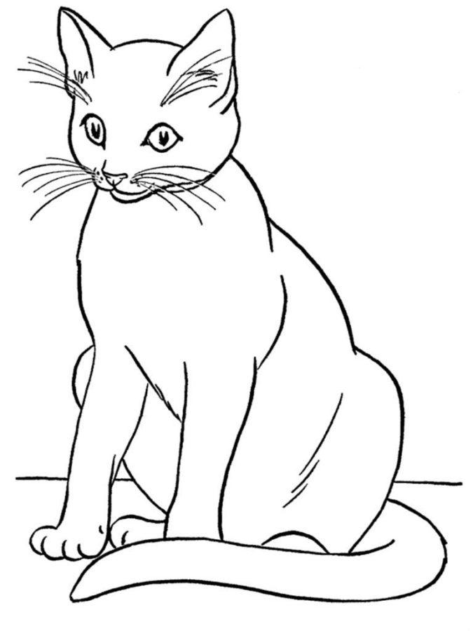 Раскраска белая кошка