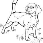 Раскраска собаки Бигль