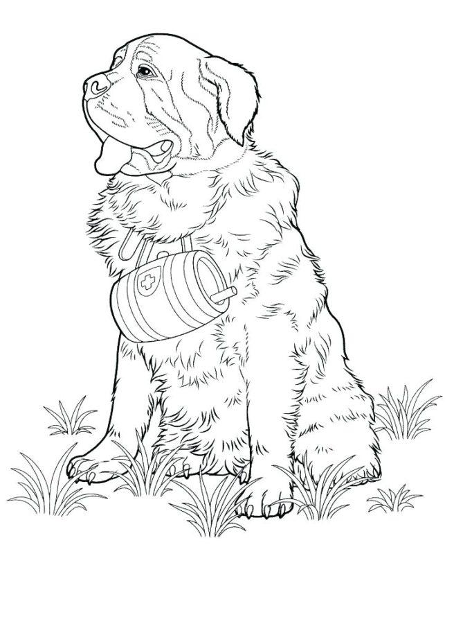 Раскраска большой собаки