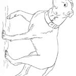 Собака раскраска чёрная