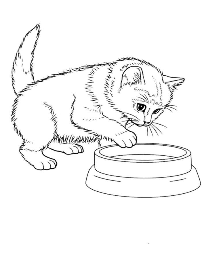 Раскраска домашняя кошка