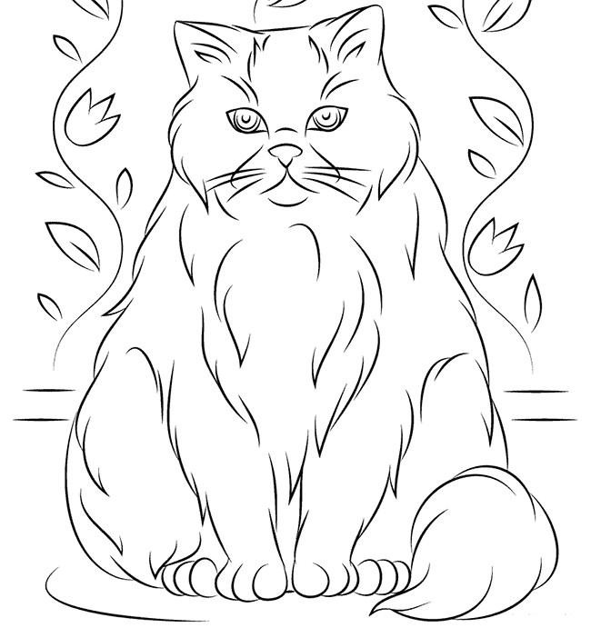 Раскраска Гималайская кошка