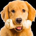 Раскраски собак для детей