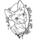 Раскраска кошка сфинкс
