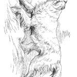 Раскраска охотничья собака