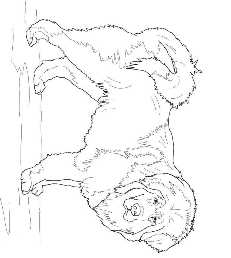 Собака Алабай раскраска