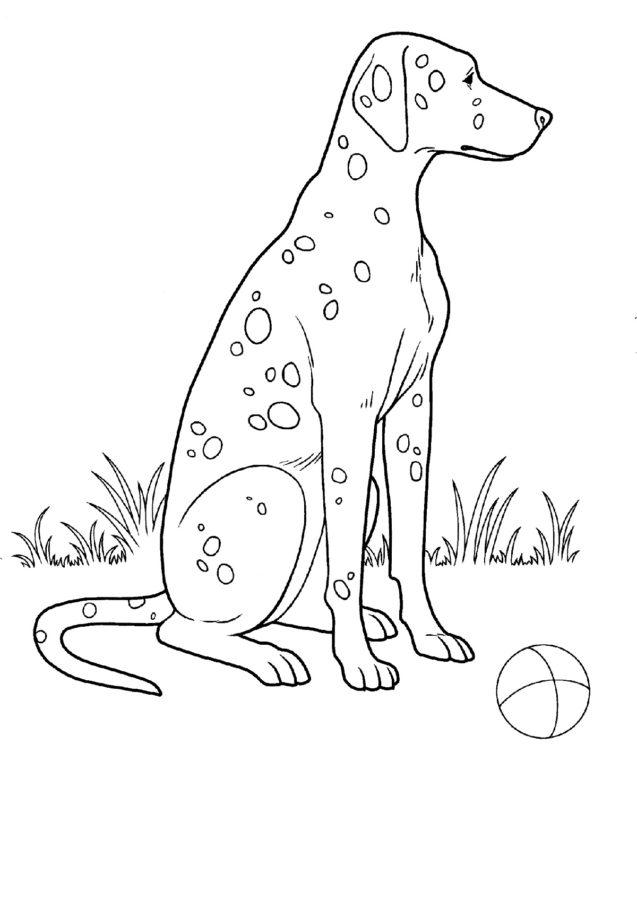 Собака Далматинец раскраска