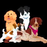 Собаки по породам