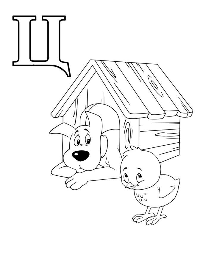 """Раскраска """"Ц"""" с цыплёнком собакой в будке"""