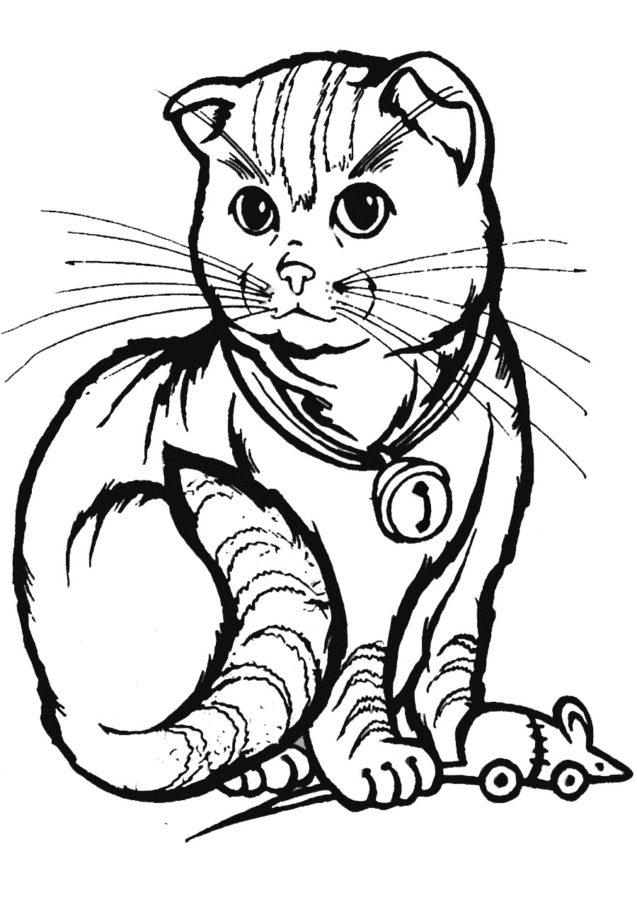 Раскраска Вислоухая кошка