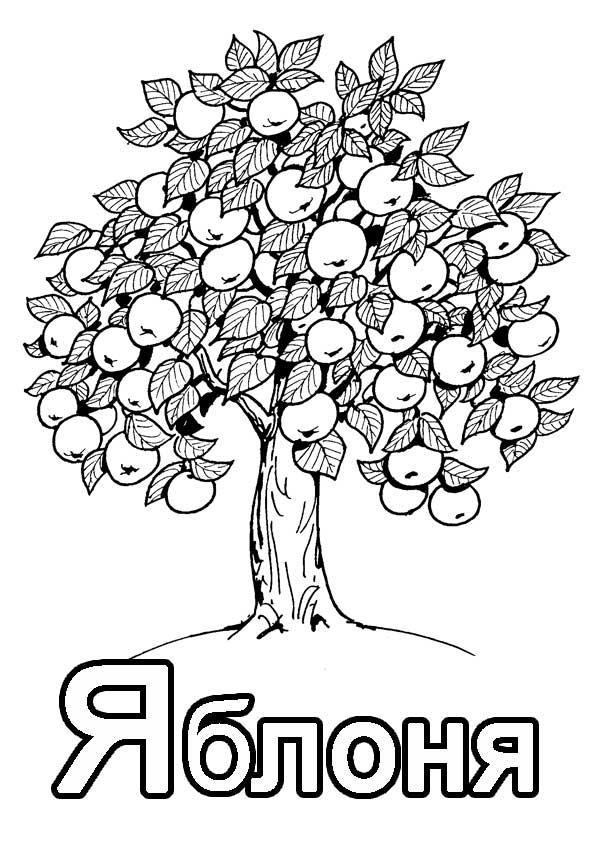 """Буква """"Я"""" дерево яблоня с плодами"""