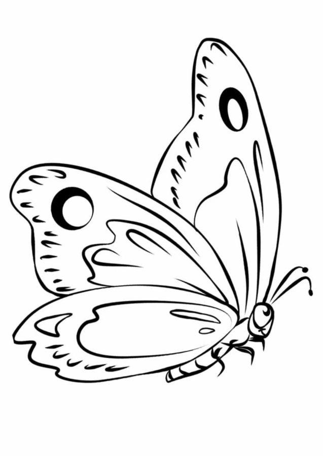 Бабочка в полёте