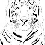 Белый тигр раскраска