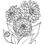 Цветы Георгины раскраска