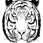 Раскраска голова тигра