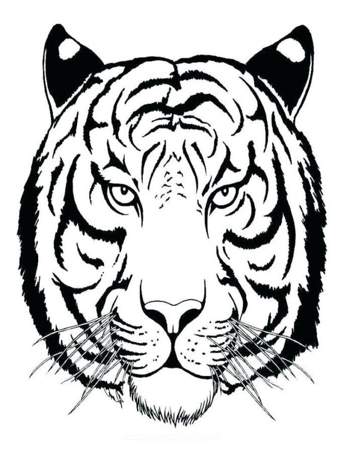 Голова тигра раскраска