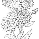 Хризантема раскраска