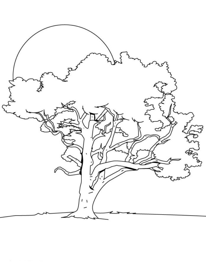 Картинка дуба