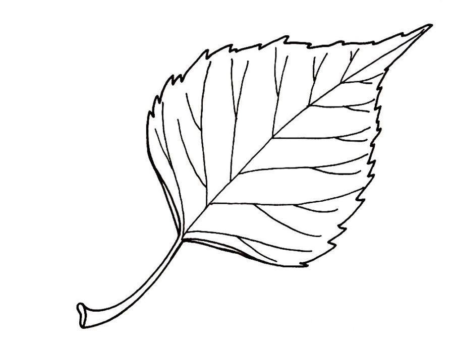 Лист березы раскраска