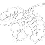 Листья дуба раскраска