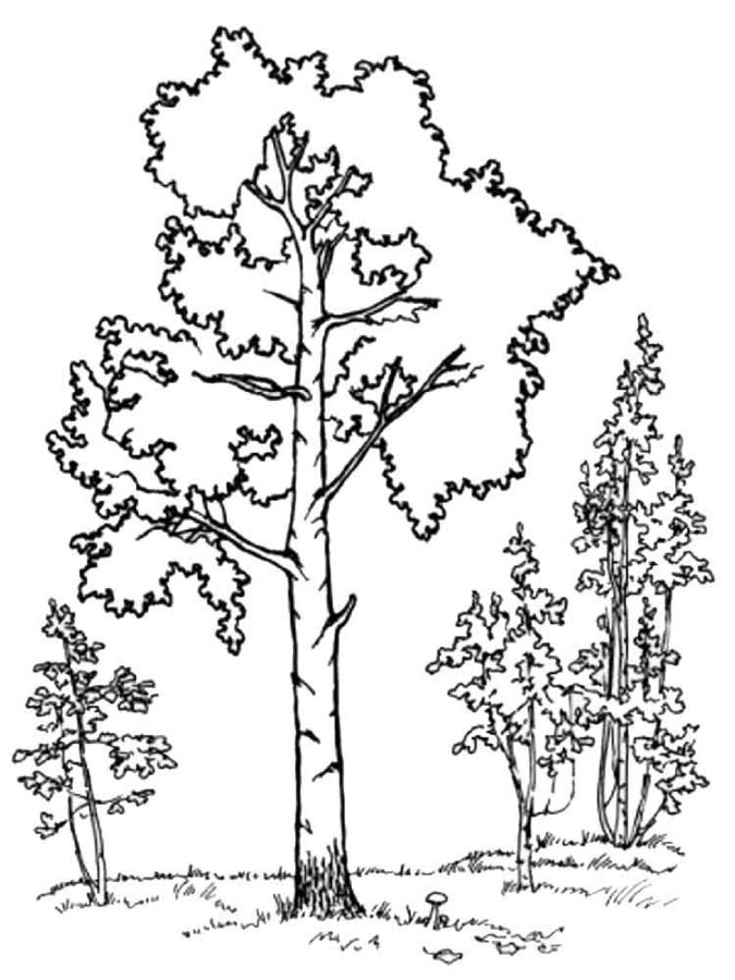 драки картинки с контурным изображением деревьев грибы