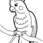 Попугай Какаду раскраска
