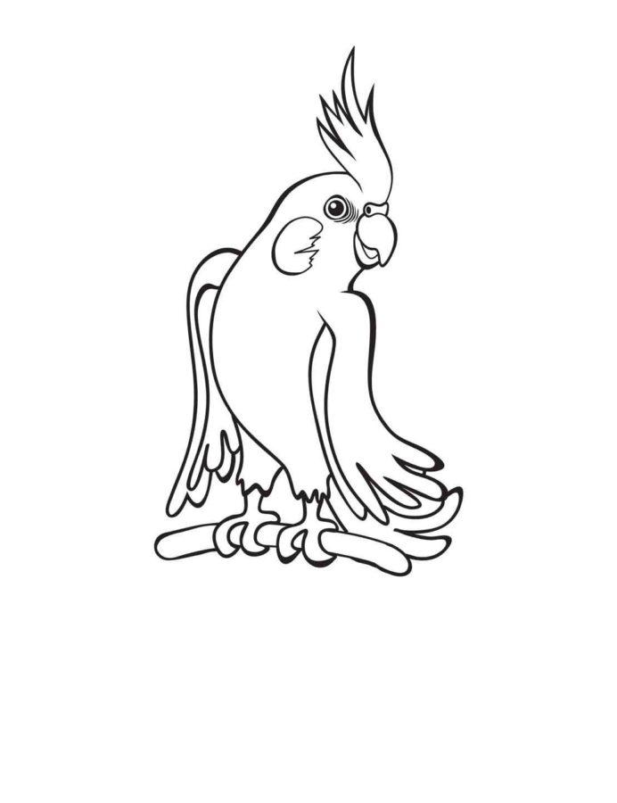 Попугай Корелла раскраска