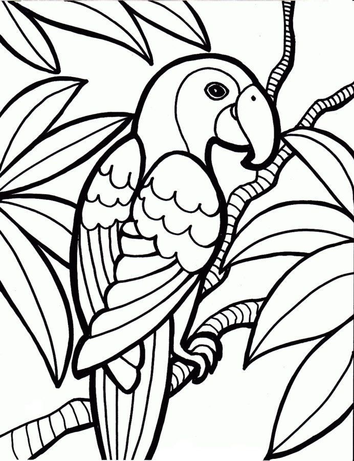 Раскраска попугай на ветке