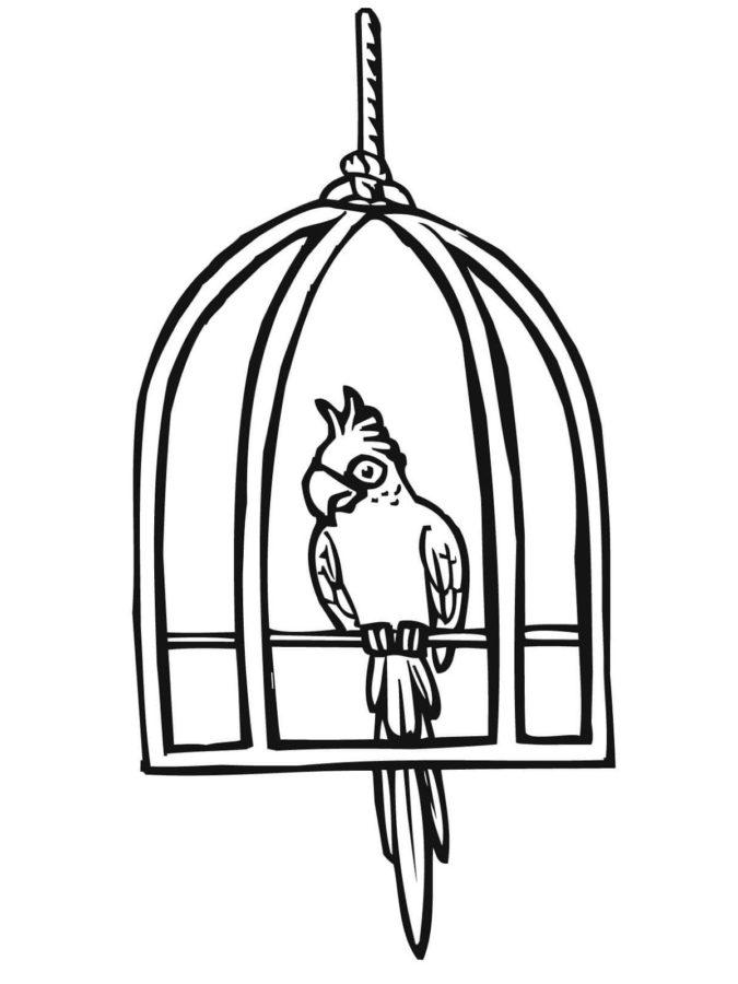 Попугай в клетке раскраска
