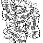 Раскраска бабочки крупные