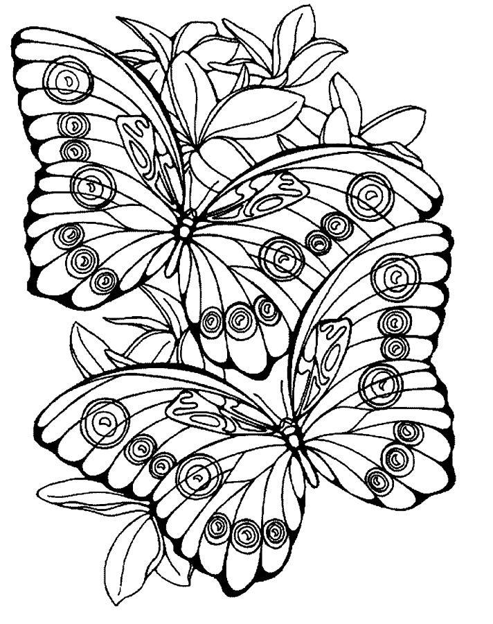 Крупные бабочки