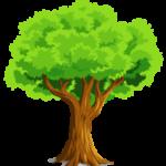 Раскраска дуба