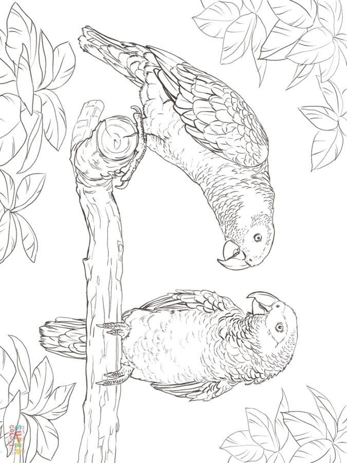 Раскраска два попугая