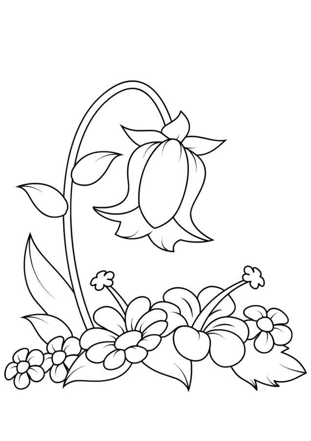 Колокольчик цветок