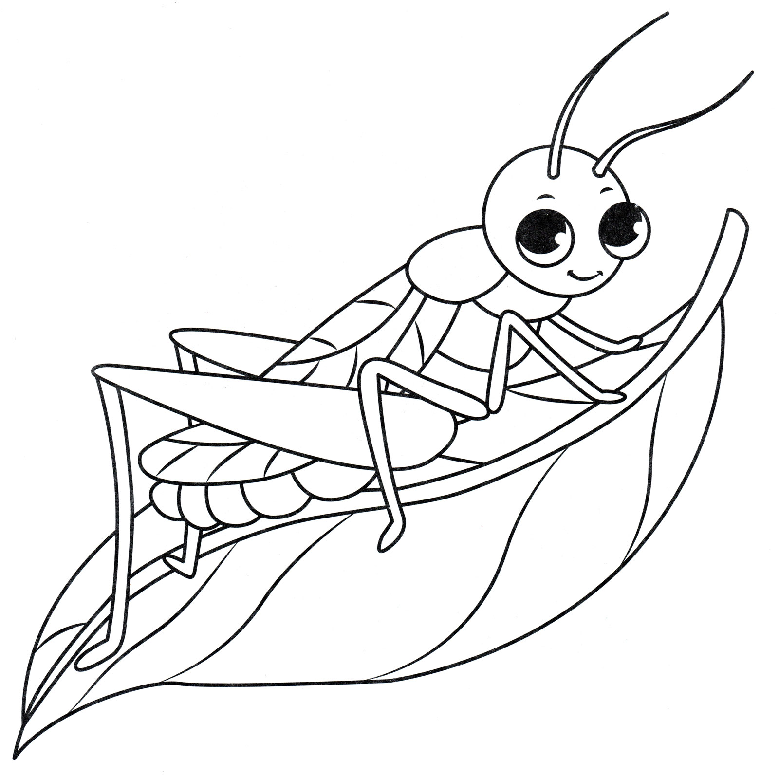 картинки для раскрасок насекомые