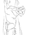 раскраска лабрадор