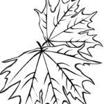 Раскраска два листика клена