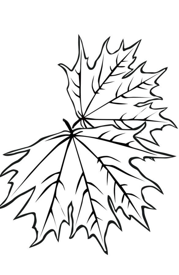 Два листика клёна