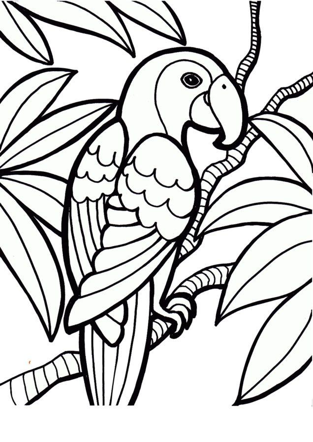 Раскраска попугай Ара