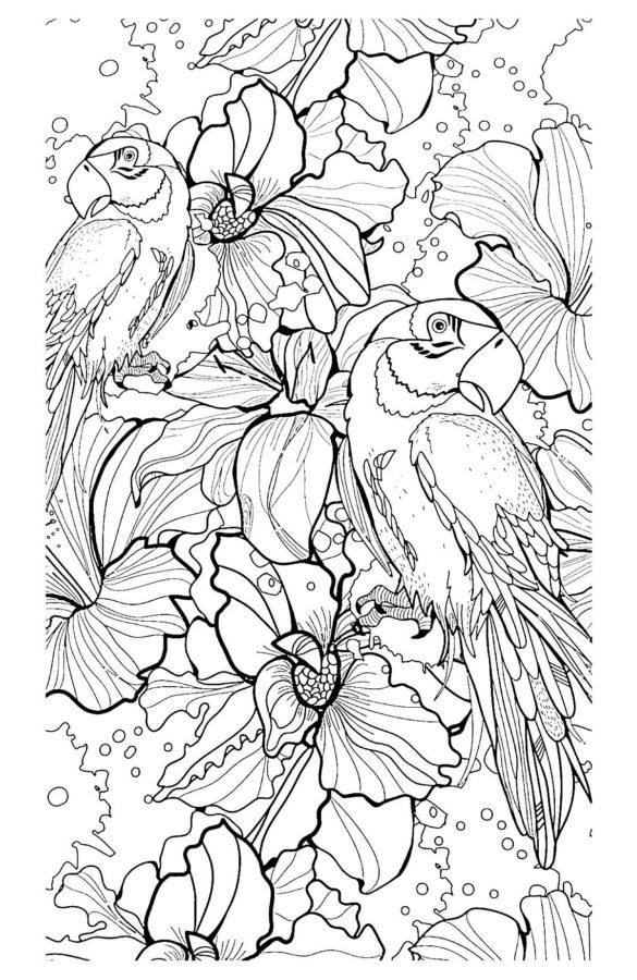 Раскраска попугай (сложная)