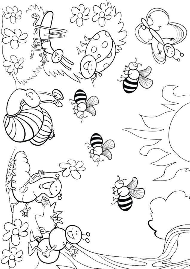 Разные насекомые