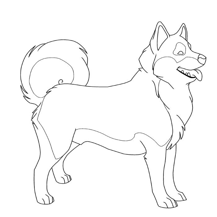 Раскраска собака Хаски