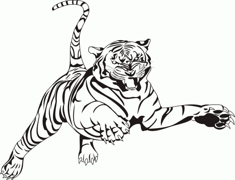 Раскраска тигр рычит