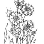 Раскраска Василек цветок