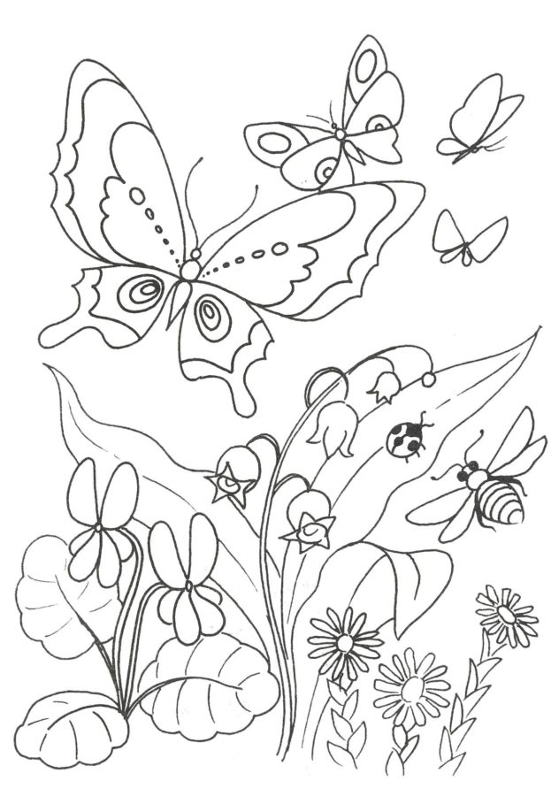 Раскраски бабочки на лугу