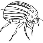 Раскраски колорадский жук