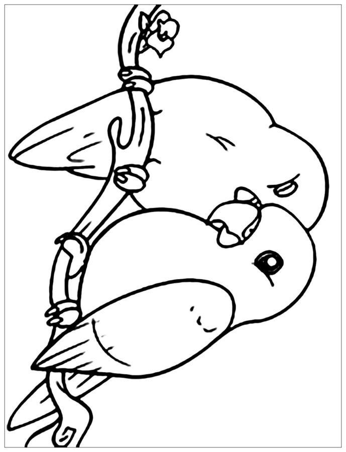 Раскраска попугайчики неразлучники