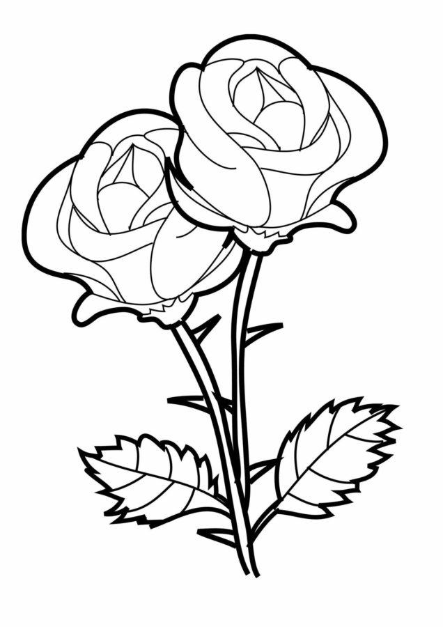 Раскраска две красивые розы